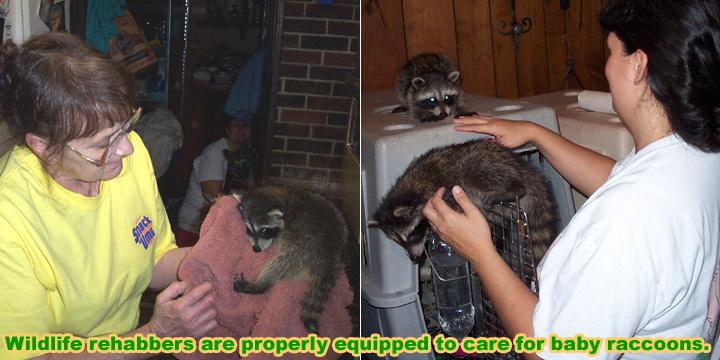 wildlife rehabilitator how to become